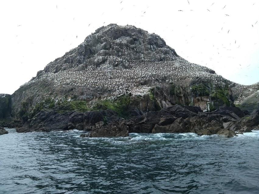 自然保護区の7つの島「Sept-Iles」
