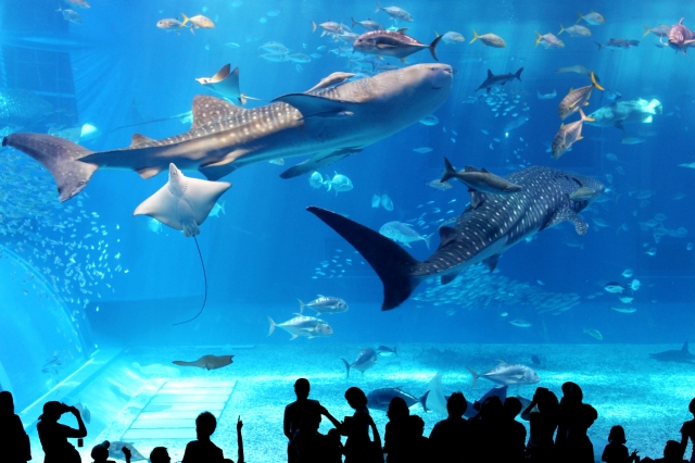 日本の水族館はハイレベル