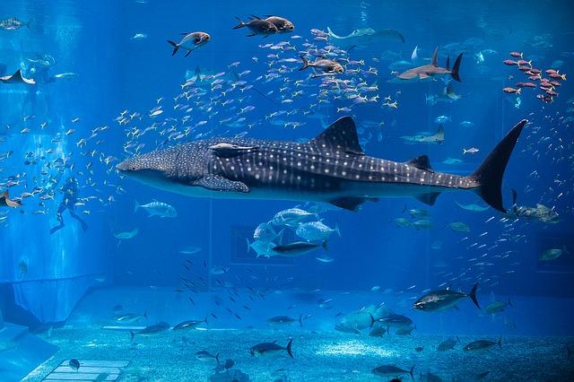 フランス最大の水族館、フランス国立海洋センター【Nausicaä】