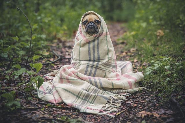 毎年10万匹の犬・猫の多くはバカンス前に捨てられる